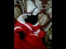 мой кот дет мороз! пошла наркомания