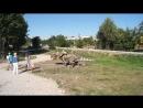 Минский парк динозавров