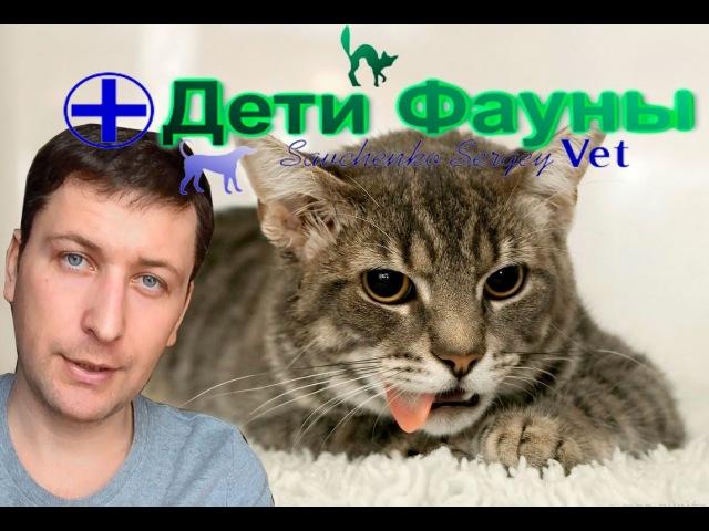 Кошку рвет Рвота у кошки основные причины что делать Советы ветеринара