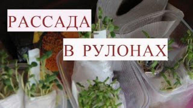 Метод Керимова. Посев Семян в Рулоны на Рассаду. Сеем Бархатцы.