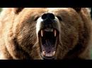 Медведь / Lours1988 Потрясающий фильм