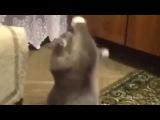 Занимаем кота ) ТАТАРСКАЯ БАБКА ПОеТ ПЕСНЮ. смешные кошки которые поют. приколы с...