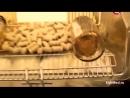 Истории болезней Алкоголизм (Документальный фильм) (сколько небезопасно можно спать после карельницы от запоя)