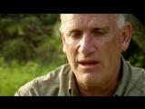 BBC Natural World 2012 - Tiger Island (HDTV x264)