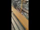 конт зоопарк гелек