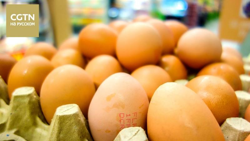 Зараженные фипронилом яйца достигли 15 стран ЕС, Швейцарии и ОАР Сянган