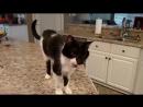 Кот Джек