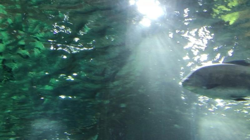 Крокус Сити Океанариум (подводный туннель)