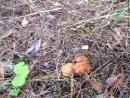 3.В лесу за котеджами через овраги вдоль изгороди(24 сентября 2016 г., 10ч28м36с)