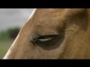 Темная лошадка