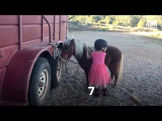 Девочке удалось залезть на пони за 16 попыток. А если бы она на второй раз сказала:
