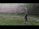 Тренировка BH Begleithund, собака-компаньон
