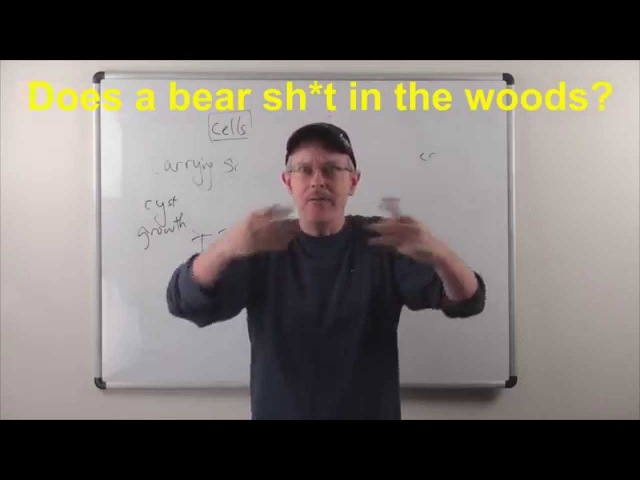 Learn English: Daily Easy English 0888: Does a bear sh*t in the woods? More