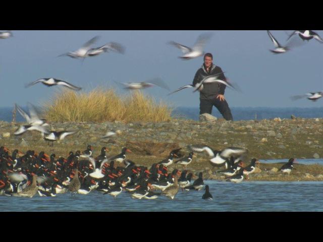 BBC Тайная жизнь птиц Жизнь на краю 3 серия