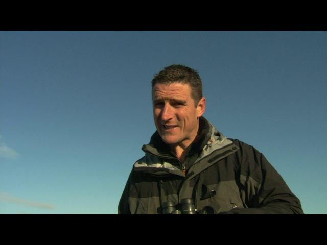BBC: Тайная жизнь птиц: Хор на рассвете / 1 серия