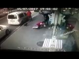 В Турции кошка напала на  собаку и её хозяйку - ЗВ