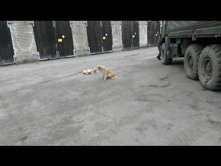 25 бригада-просто звери