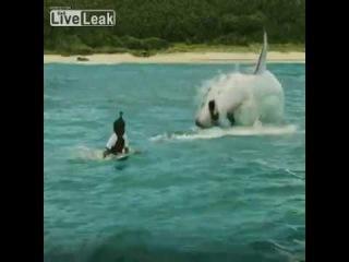 LiveLeak com Man eaten by shark