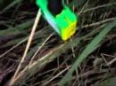 Генератор 4 киловатта (демонстрация в лесу)