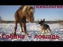Разница психологии собаки и лошади