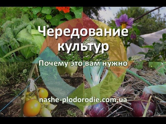 Севооборот - чередование культур на огороде 1
