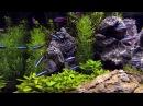 100 красных неонов в аквариуме видео HD