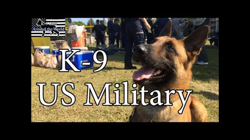 US Military Working Dogs in Training Action