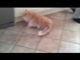 Сломали ещё одного кота