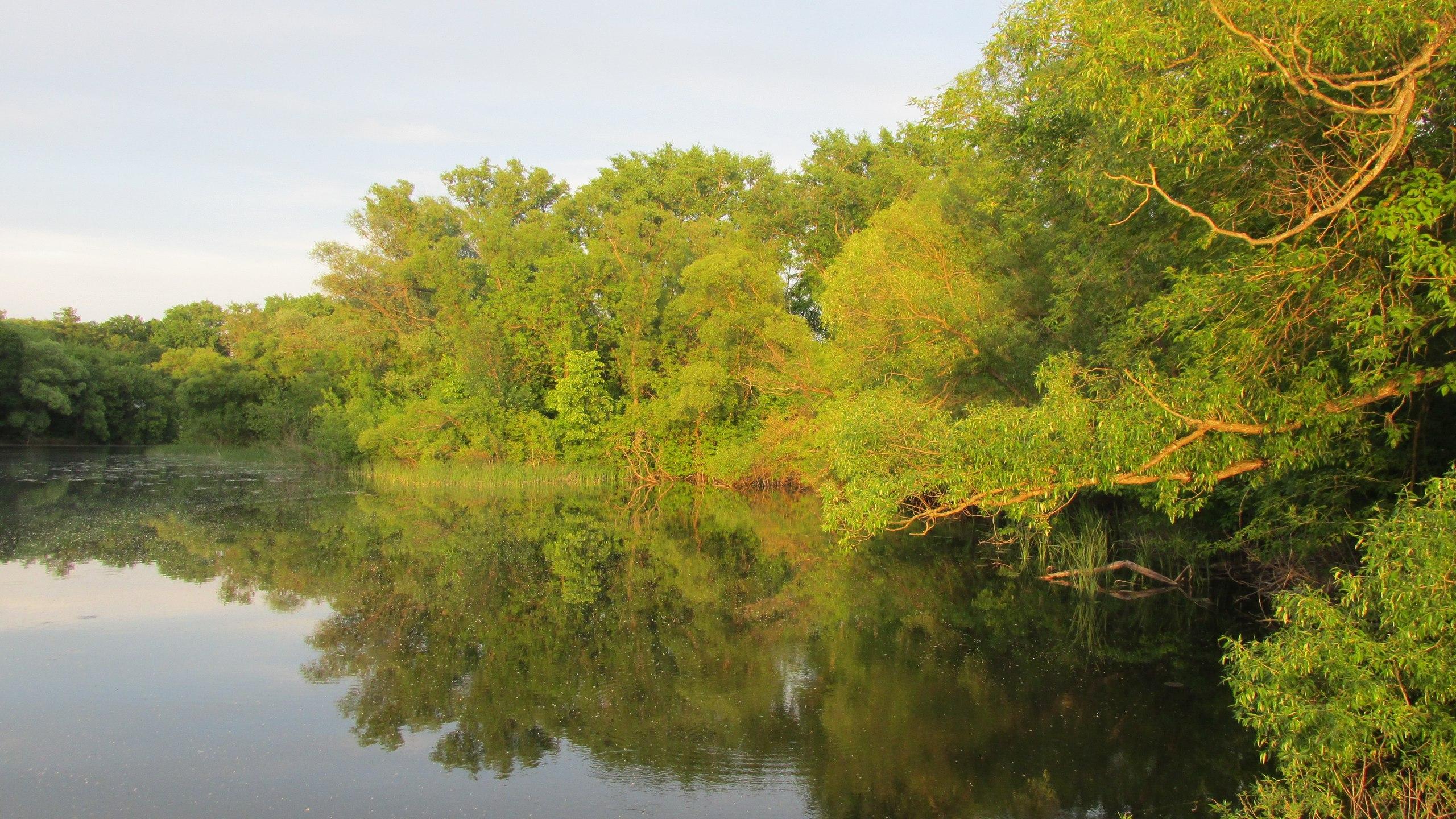 река лесной тамбов фото поздравления