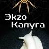 Эkzo_Калуга (змеи пауки улитки и прочие радости)
