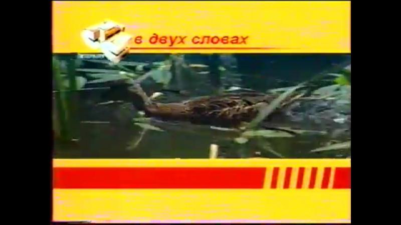 (staroetv.su) Заставка В двух словах (СТС-Петербург, 2005-2006)