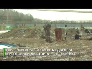 Ярославские медведи предсказали, каким будет лето-2017