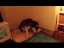 Собачка Чихает :3