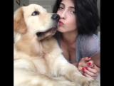 Настоящая любовь собаки и человека