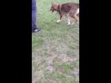 Пропала собака!!