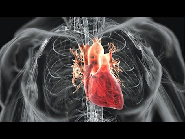 Необычные факты о нашем теле Внутренние органы часть 2 ytj sxyst afrns j yfitv ntkt dyenhtyybt jhufys xfcnm 2