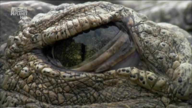 АР. В дебрях Африки. Озеро Туркана. Земля крокодилов. 2002