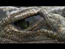АР В дебрях Африки Озеро Туркана Земля крокодилов 2002