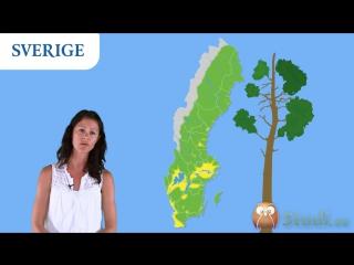 Geografi - Sverige - en Introduktion