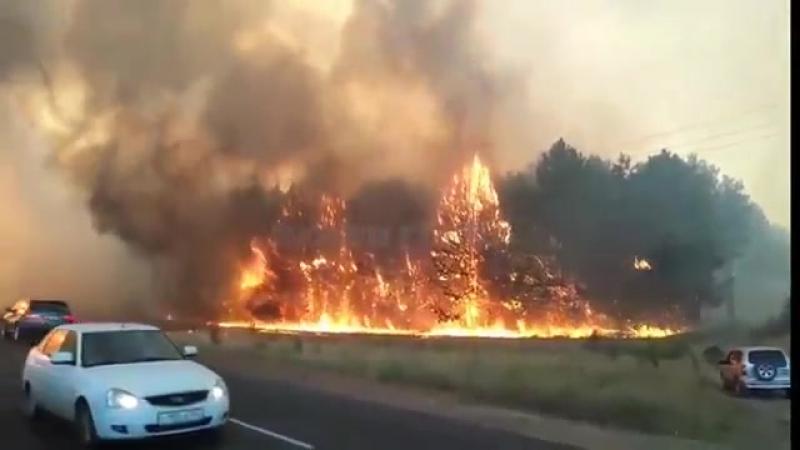 Пожар в Лесхозе 15 08 2017 Каменск Шахтинский