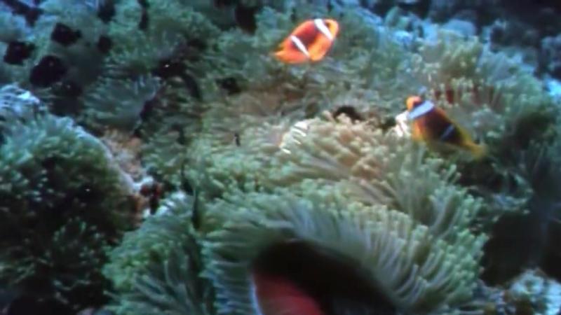 03 1967 Коралловые джунгли - Подводная одиссея команды Кусто
