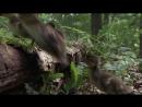 Сезонные леса BBC Планета Земля