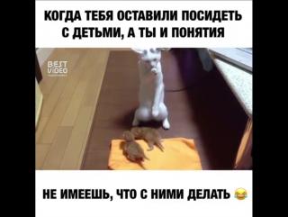 Ох уж эти коты