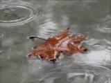 Андрей Данцев Боссанова дождя