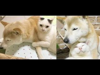 Кот присматривает за старым и больным псом, ведь он его друг!