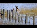 Интересный Документальный фильм 2 Гонка на выживание великие миграции