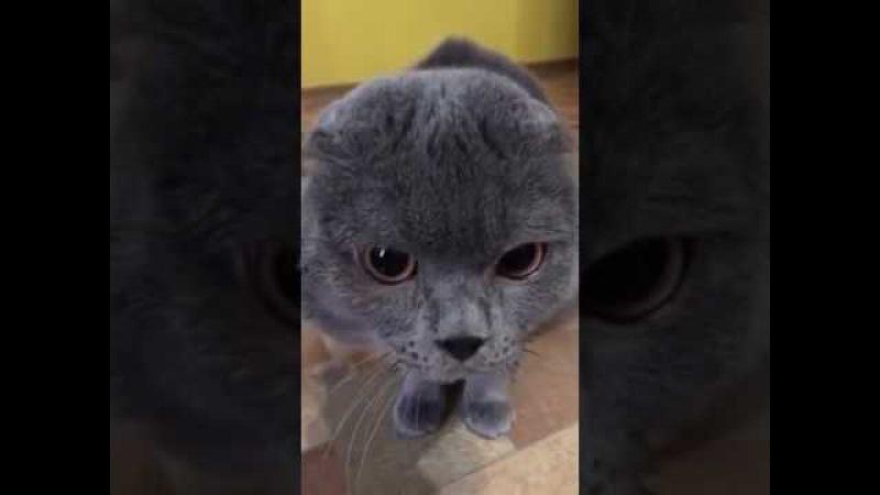 Кот, зовущий Галю, стал звездой интернета