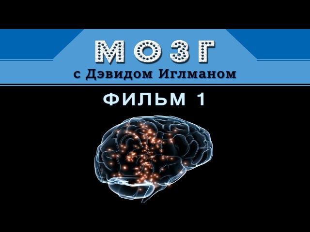 Мозг с Дэвидом Иглманом | Фильм 1 | Что такое реальность? || Док. Фильм HD 720p