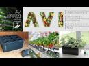 AVI - Домашние гидропонные фермы