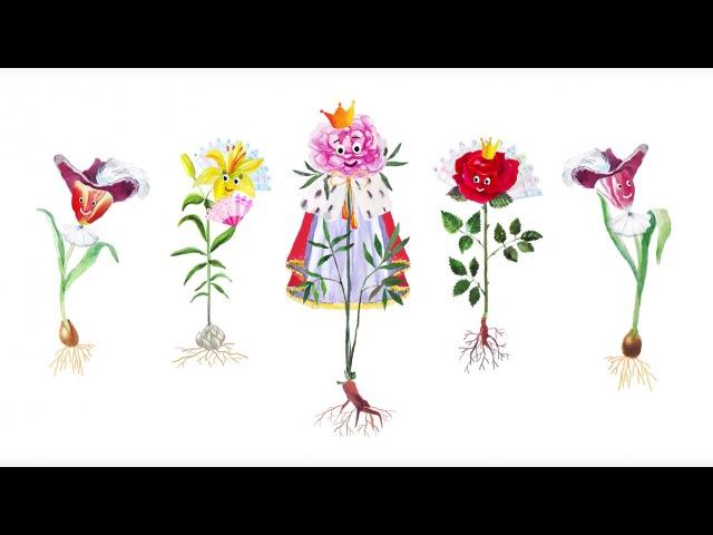 23. Цветковые травы. Часть 1